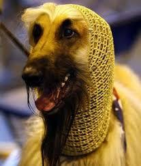 afghan hound puppies ohio females kasban afghan hounds the afghan hound pinterest