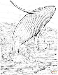 blue whale jumping out of the water coloring page free printable