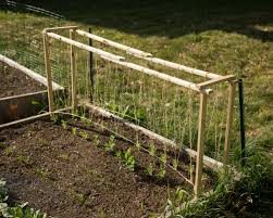 How To Make Trellis For Peas Just Built This Pea Trellis Hope It U0027s Tall Enough About 26