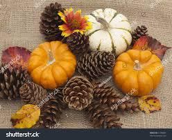 still fall objects ornamental pumpkins stock photo 61758007
