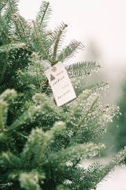 shopper u0027s diary a christmas tree farm in maine gardenista
