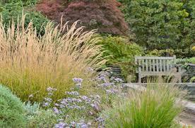 new new garden best ornamental grasses