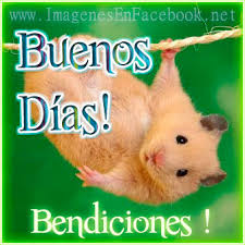 www imagenes imágenes con frases para dar los buenos días feliz día buen día