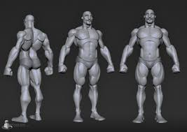 Male Anatomy Video 95 Best Anatomy Images On Pinterest Anatomy Reference Human