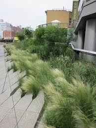 perennial grasses bath garden center