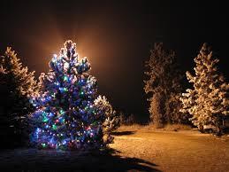 kitchen kitchen lighted trees at walmart flocked