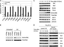 bad bid involvement of bim bad and noxa in uv induced apoptosis a