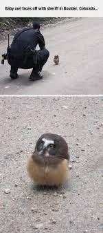 Owl Memes - curious fluffy little owl meme xyz