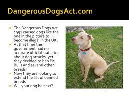 american pitbull terrier uk law dangerous dogs act v1