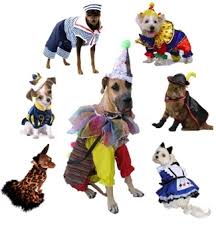 Halloween Costumes Puppies Hottest Halloween Costumes Pets Sizes Posh Puppy