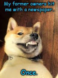 Meme Generator Doge - troglodyte conserva troll troglodyte conserva troll hears