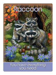 12 raccoon says u201cyou have everything you need u201d earth magic