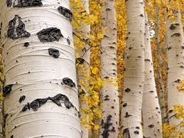 tree pattern photos trees wallpaper gallery national geographic