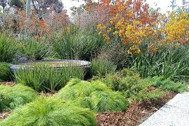 melbourne native plants landscaping ideas for small townhouse front brokohan garden page