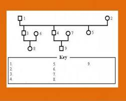 genogram software free download barcode software