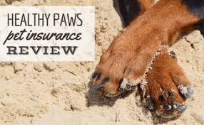 Comfort Insurance Reviews Is Healthy Paws The Best Pet Insurance