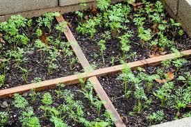 create a healing garden and grow your own medicinal plants organic