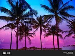 miami south sunset palm image photo bigstock