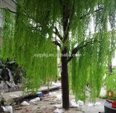 bonsai saule pleureur rechercher les meilleurs arbre saule pleureur fabricants et arbre
