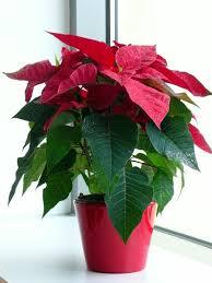 Easy Care Indoor Plants Decorative Indoor Plants U2013 Easy Care Potted Plants Interior