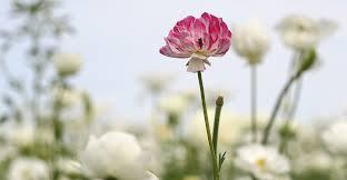 flower pro florapedia proflowers