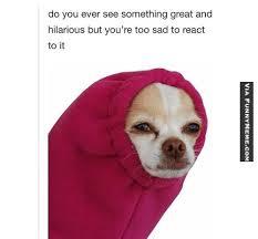Tired Dog Meme - dog memes too tired of life chihuahuas pinterest dog memes