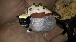 Meme Halloween Costume My Friend Creates Homemade Halloween Costumes For Her Cats