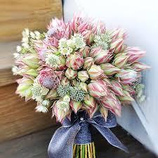 protea flower blushing proteas wedding bouquet ideas in season now brides