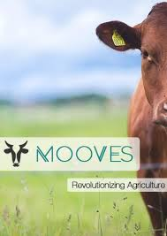 Mooves
