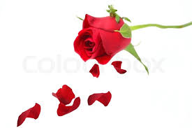 top tattoo with rose petals dropping tattoo u0027s in lists for pinterest
