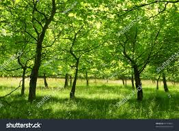 forest glade vivid summer young forest glade stock photo 41779057 shutterstock