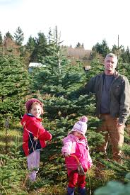 thrifty thurston selects the perfect tree from a bounty of olympia