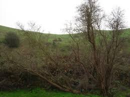 san francisco u0027s best landmark trees