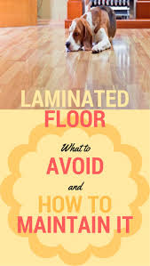 Laminate Floors And Pets 152 Best Cleaning Tips Carpet Floors Windows U0026 Walls Images On