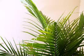 5 amazing health benefits indoor plants simply