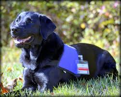 Comfort Pet Certification Giving Back To The Community Therapy Dogs Offer Companionship