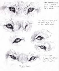wolf face coloring page 70 best draw a wolf images on pinterest drawings animals and draw
