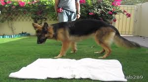 how to train a dog to settle down relax youtube