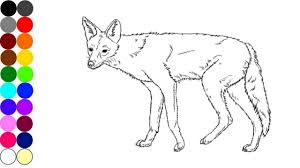 wild animals coloring pages jackal name and sound draw and