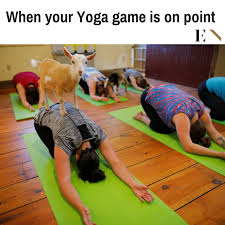 Funny Yoga Meme - 14 funny memes that will leave you on the floor laughing