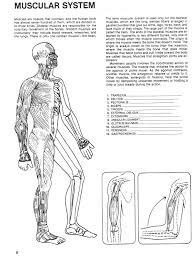 muscle diagram worksheets u2013 hd m com