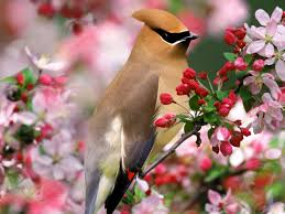 Wallpaper With Birds Flowers For Flower Lovers Flowers Desktop Wallpapers With Small