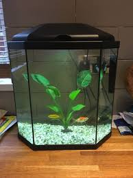 fish tank exceptionalsh tank pets photo inspirations buying an