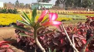 beautiful and rare flowers in nursery hd video youtube