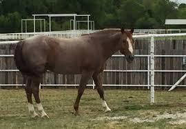 Black Mustang Ranch Pilot Point Texas Home Lancaster Ranch