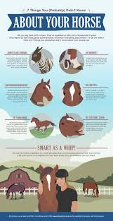 10 best horse first aid tips images on pinterest horse tips