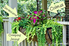 What To Plant In Window Flower Boxes - the best plants for hanging baskets on front porches