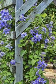 plant support for the garden u2013 tips on choosing garden plant supports