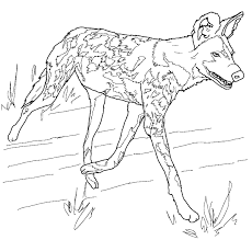 wild dog coloring pages african wild dog or painted hunting dog