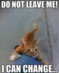 Funniest Cat Meme - 10 top feb 2018 hilarious cat memes quoteshumor com